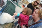 Touching the big bunny.